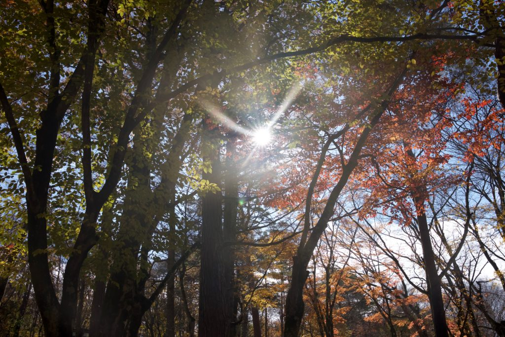 Camping Trip in Lake Yamanaka